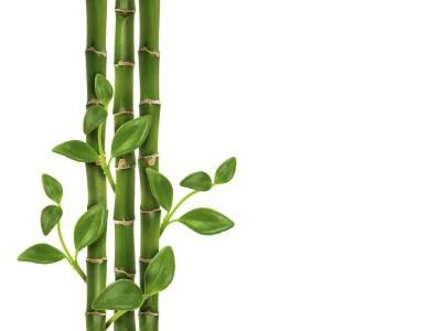 meanings-lucky-bamboo-stalks-1.1-800x800