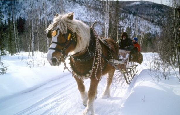 wintersleighride