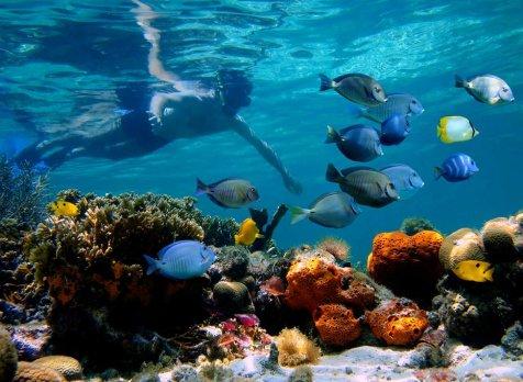 snorkel-tour-milos